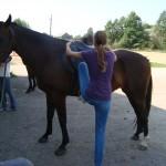лагерь с лошадьми