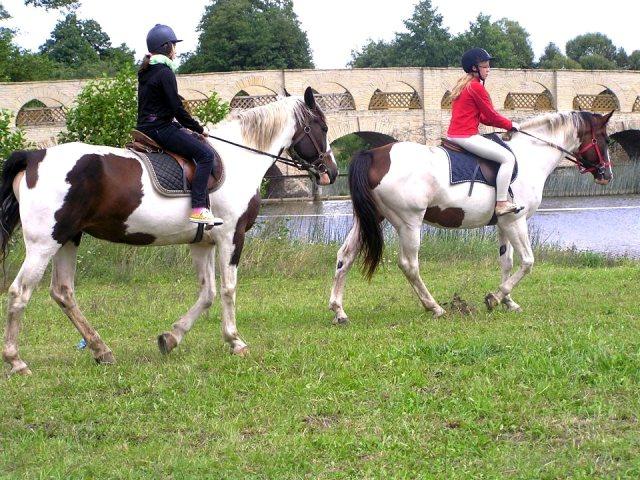 лагерь с лошадьми в Литве