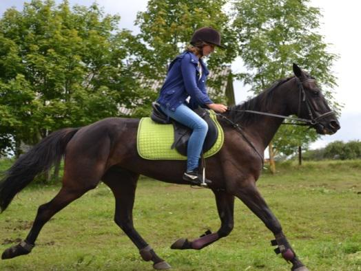 конный лагерь в Литве 2017