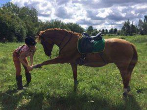 конный лагерь в Латвии