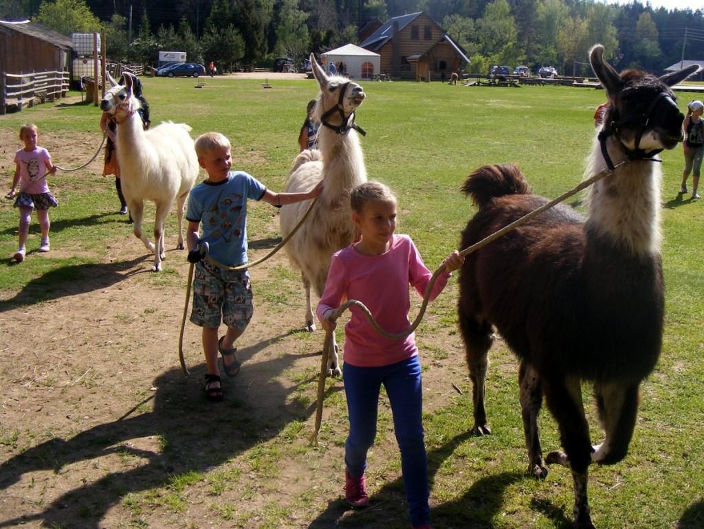Лагерь для детей от 7 до 12 лет